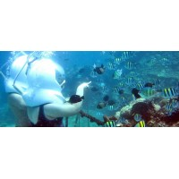 Ocean Walker + Ubud Tour