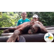 Breakfast with orangutan at Bali Zoo Park, Tegenungan Waterfall