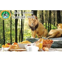 Breakfast with Lions - Masceti black sand beach