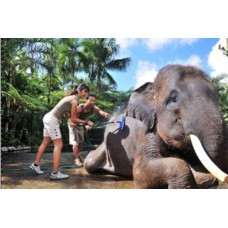 Jumbo Wash The Elephant With Transport