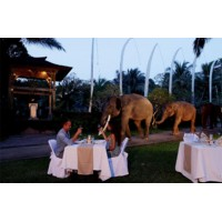 Safari Under The Stars New Iclude Night Safari, Show, Dinner with transport